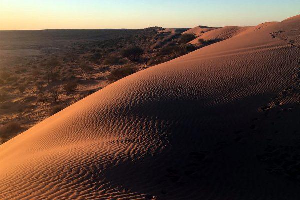 Big Red - Simpson Desert